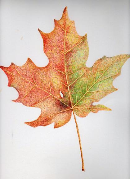 leafredo.jpg