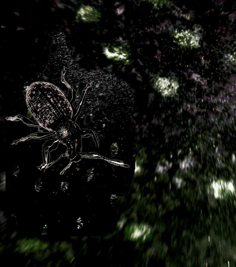 Weevil landscspe.jpg